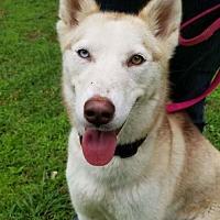 Adopt A Pet :: PHOENIX - Powder Springs, GA