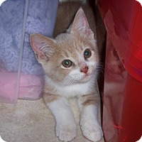 Adopt A Pet :: Clover - Richmond, VA
