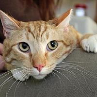 Adopt A Pet :: Lars - San Jose, CA