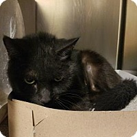 Adopt A Pet :: Jesse - Philadelphia, PA