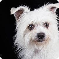 Adopt A Pet :: Artie - Lodi, CA