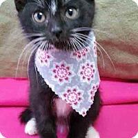 Adopt A Pet :: Kaboodle - Gahanna, OH