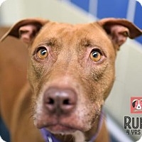 Retriever (Unknown Type) Mix Dog for adoption in Gulfport, Mississippi - Ruby* - Lonely Heart