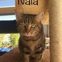 Adopt A Pet :: Nala - Buellton, CA