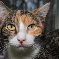 Adopt A Pet :: Pearl - Elkhorn, WI