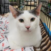 Adopt A Pet :: Kayleigh - Ellicott City, MD