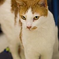 Adopt A Pet :: Ollie - Philadelphia, PA