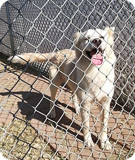 Husky Mix Dog for adoption in San Antonio, Texas - Ted