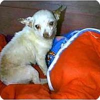 Adopt A Pet :: VADER - dewey, AZ