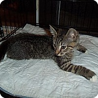 Adopt A Pet :: Bruno - Catasauqua, PA