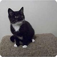 Adopt A Pet :: Cricket - Modesto, CA