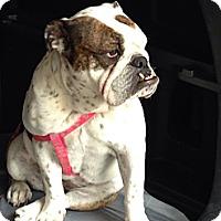 Adopt A Pet :: Zoe - Decatur, IL