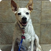 Adopt A Pet :: Annie - Bristol, TN