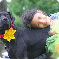 Adopt A Pet :: Kanga - Eugene, OR