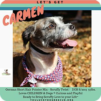 German Wirehaired Pointer Mix Dog for adoption in Alpharetta, Georgia - Carmen
