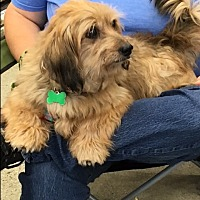 Adopt A Pet :: Murray - West Los Angeles, CA