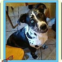 Adopt A Pet :: Rosanna - West Los Angeles, CA