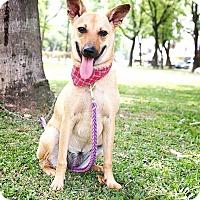 Adopt A Pet :: Tracy - San Mateo, CA