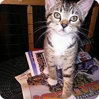 Adopt A Pet :: Archer - Centerton, AR