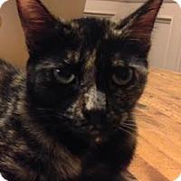 Adopt A Pet :: Skittles - Napa, CA