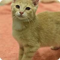 Adopt A Pet :: Helen - DFW Metroplex, TX