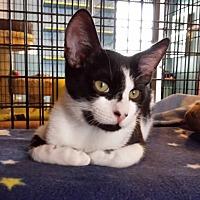 Adopt A Pet :: Trey - Deerfield Beach, FL