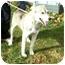 Photo 2 - Husky Mix Dog for adoption in Metamora, Indiana - Ryder