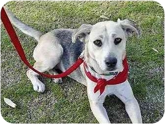 Shepherd (Unknown Type) Mix Dog for adoption in San Diego, California - Mindy
