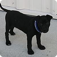 Adopt A Pet :: Drake - Loxahatchee, FL