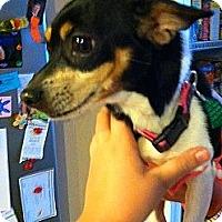 Adopt A Pet :: Whinnie - Glen Burnie, MD