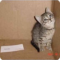 Adopt A Pet :: Tika - Inverness, FL