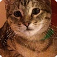 Adopt A Pet :: Aria - St. Louis, MO