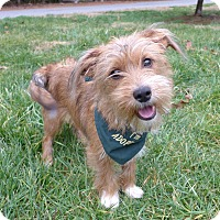 Adopt A Pet :: Piper - Mocksville, NC