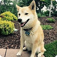 Adopt A Pet :: Akana - Centennial, CO