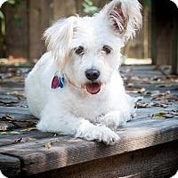 Adopt A Pet :: Cassie - Kingwood, TX