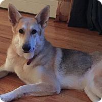 Adopt A Pet :: SAMANTHA - Tully, NY