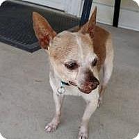 Adopt A Pet :: Paulie (Paul) - Shawnee Mission, KS