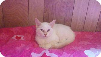 Domestic Mediumhair Kitten for adoption in Mims, Florida - Raphael