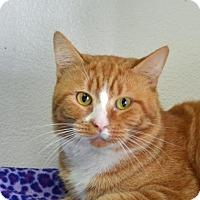 Adopt A Pet :: Pumpkin - Englewood, FL