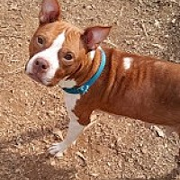 Adopt A Pet :: Sarah - Loganville, GA
