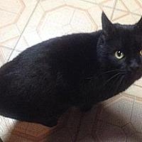 Adopt A Pet :: Blackie - Plain City, OH