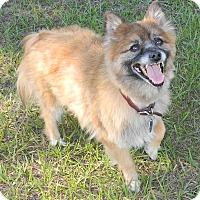 Adopt A Pet :: Cisco - Umatilla, FL