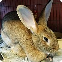 Adopt A Pet :: Honey - Lancaster, PA