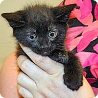 Adopt A Pet :: Nitro - Wildomar, CA