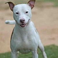 Adopt A Pet :: PRINCE - Tallahassee, FL