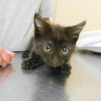 Adopt A Pet :: Jarvis - Quincy, IL