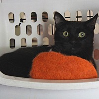 Adopt A Pet :: Bella - Lombard, IL