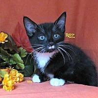 Adopt A Pet :: Mr. Stach - Herndon, VA