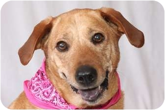 Labrador Retriever Mix Dog for adoption in Knoxville, Tennessee - Sadie