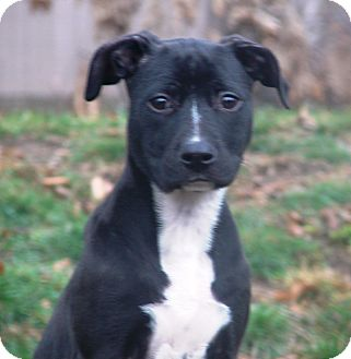 Terrier (Unknown Type, Medium) Mix Puppy for adoption in Kalamazoo, Michigan - Elle